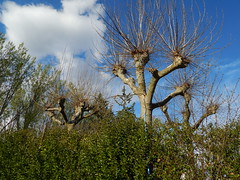 Left to their own devices (amgirl) Tags: spain 2017 navarra march31 day2 evening puente la reina trees path clouds
