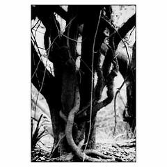 Russell Gardens # 5 (bruXella & bruXellius) Tags: dover uk parc garden russellgardens blackandwhite bnw monochrome tree baum arbre