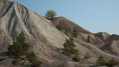 It´s Lonesome on the Top (jurgenkubel) Tags: trees träd bäume gravelheap grushög olympus gravel grus furilden furrillen gotland sverige scweden sweden kies