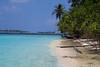 Airone Cenerino sulla spiaggia, stanziale sull' isola. Grey Heron on the beach, sedentary on the island. (omar.flumignan) Tags: heron airone grey cenerino isola island maldive maldives biyadhoo atoll atollo feliduu mare sea wather acqua palma palm canon g7xmk2 sand sabbia allnaturesparadise flicktravelaward ngc