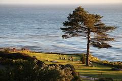 Nostalgia (madsmiller) Tags: esalen california coast tree love compassion warmth freedom