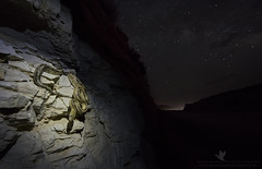 Shinin' Under the Stars (santosh_shanmuga) Tags: trans pecos transpecos rat snake ratsnake herp reptile herpetology suboc animal nature wild wildlife outdoor outdoors herping nikon d810 1424mm wideangle stack exposure blend west texas westtexas val verde valverde langtry rio grande shining shine cut cuts road star night sky stars starry milky way milkyway galaxy