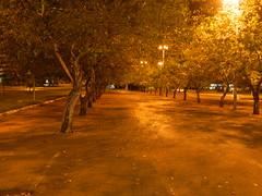 Brasilia Downtown 3 (Leo Castelo Branco) Tags: brasília brazil brasil distrito federal df night noite tree árvore garden parque orange laranja light luz