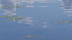 water sprites (hornbym) Tags: refelction water blue sky lake drifting clouds