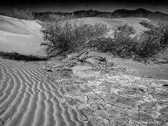 Arid Land (claudiov958) Tags: biancoenero blackwhite blancoynegro california černýabílý claudiovaldés czarnyibiały deathvalley desert dunes landscape mediumformat mediumformatdigital mesquitesanddunes ngc noiretblanc pentax645z pretoebranco sanddunes schwarzundweiss черноеибелое smcpentaxdfa64555mmf28alifsdmaw photoka