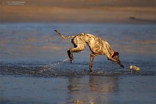Lulu's splashing fun!