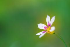 your space (hitohira_) Tags: flower flowers n natu nature bokeh