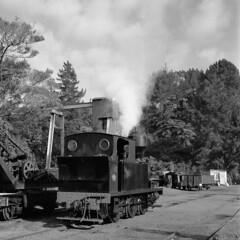 The Little Engine That Could (Brett Dickson) Tags: newzealand huntly btc pukemiro train streamtrain engine steam peckett film rolleicord rolleicordiv rollei