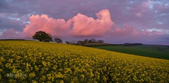 Red Fractus (http://www.richardfoxphotography.com) Tags: fractusclouds thunderstorm pinkskies pinkclouds redsunset southdevon rapefield outdoors