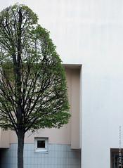 Art topiaire (Fontenay-sous-Bois Officiel FRANCE) Tags: fontenay fontenaysousbois regionparisienne valdemarne iledefrance 94 94120 fsb france rue street arbre tree arttopiaire architecture green vert lignes lines curves fenêtre window mur wall
