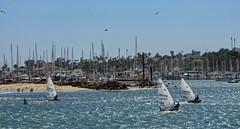 Sailing into the Wind, Santa Barbara Harbor, California (Gail K E) Tags: sailing california santabarbara usa pacificocean ocean boating watersports
