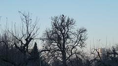 DSC02137 (ES_789) Tags: fellbach hasentanz winter nachmittag makro reif sony a6000 remstal
