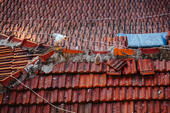 DSCF3734.JPG (esintu) Tags: seagull chick roof tile urban bird istanbul