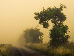 Road to Nowhere (Netsrak) Tags: baum bäume europa europe forst landschaft natur nebel wald fog forest landscape mist nature tree trees woods eu road weg path street grass gras