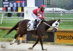 "2017-04-22 (20) r1 Jevian Toledo on #2 Great Smoke (JimFleenor) Tags: photos photography md marylandracing maryland marylandhorseracing laurelpark jockey جُوكِي ""赛马骑师"" jinete ""競馬騎手"" dżokej jocheu คนขี่ม้าแข่ง jóquei žokej kilparatsastaja rennreiter fantino ""경마 기수"" жокей jokey người horses thoroughbreds equine equestrian cheval cavalo cavallo cavall caballo pferd paard perd hevonen hest hestur cal kon konj beygir capall ceffyl cuddy yarraman faras alogo soos kuda uma pfeerd koin حصان кон 马 häst άλογο סוס घोड़ा 馬 koń лошадь"