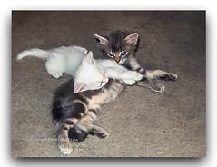 DOZURA. (manxelalvarez) Tags: ternura tenrura cariño dozura animales gatos fauna animalesdomésticos