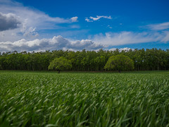 Windy In late April (Francesco Ganzetti) Tags: landscape sky clouds green panasonic 20mm olympus omd marche rural countryside colors spring fields bokeh nature woods forest oak