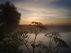 Minutes before (Jaco Verheul) Tags: sunrise flower dawn water outdoor serene fog sun cloud clouds sky landscape waterscape mist phonephoto jaco verheul colorfull samsung s7
