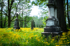 """Yellow Whispers (i)"" (D A Baker) Tags: flowers wildflowers long exposure country rural cemetery graveyard headstone tombstone marker yellow spring indiana fujifilm x100s"