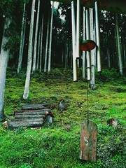 chimes and pines (kanadbose) Tags: nature green hills mountains windchimes peace india darjeeling lamahatta pines pineforest