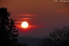 Sonnenuntergang / Sunset (R.O. - Fotografie) Tags: sonnenuntergang sunset sun sonne nieheim bäume trees himmel sky rot red rofotografie panasonic lumix dmcfz1000 dmc fz1000 fz 1000 landschaft landscape outdoor nrw owl