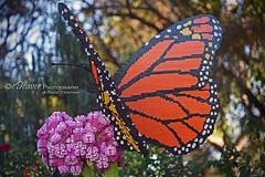 """LEGO butterfly"" (eDeaver Photography) Tags: arizona phoenix animal animals nature safari park wildlife zoo landscape outdoors wild edeevo edeaver edeaverphotography digitalcreations creations nikon"