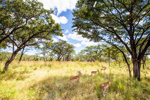 KrugerParkREIZ&HIGHRES-62
