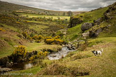 River Lyd at Black Rock, Dartmoor (Mr Whites Paw Prints) Tags: blackrock dartmoor nibbler