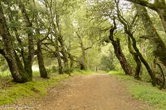 Road to ... (MohamedMM) Tags: hike montebello palo alto california nature mountains green