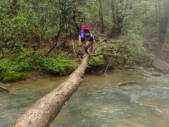 Cumberland Trail Run (9 of 34) (aaron_rinn) Tags: tenessee tree toppers team challenge 2017 cumberland trail