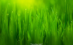 DuongNghiem photography (tuanduongtt8018) Tags: nature green life light sunlight sonya7 canon 300mm f4 l
