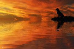 Waiting for treats... (Kerriemeister) Tags: dog waiting silhouette sunset reflection water photoshop imagination digital art magical composite composition photomanipulation