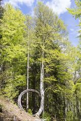 geniale! (MarcoAgustoniPhotography) Tags: trentino val sella italia bosco natura alberi faggio arte