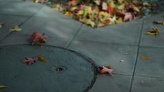 秋がきた (スリーです) Tags: calle otoño hojas sal50f18 saveearth