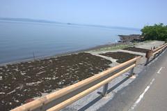 IMGP4592.DNG (Matoken) Tags: 桜島 sakurajima