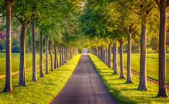 Beech avenue (289RAW) Tags: 289raw beech trees landscape moorscrichel dorset avenue
