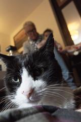 (Horace T) Tags: canon eos60d efs1022mm chat cat portrait