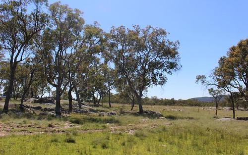 170 Mount Mackenzie Road, Tenterfield NSW 2372