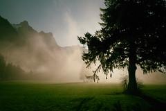 nebel & sonne (Toni_V) Tags: m2403352 rangefinder digitalrangefinder messsucher leica leicam mp typ240 type240 28mm elmaritm12828asph hiking wanderung fläsch fläscherberg stluzisteig graubünden grisons grischun switzerland schweiz suisse svizzera svizra europe fog nebel mist sun landscape alps alpen landschaft analogefexpro2 niksoftware ©toniv 2017 170325