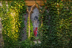 (Mark Greening) Tags: horfieldparishchurch stainedglass horfield window ivy bristol england unitedkingdom gb