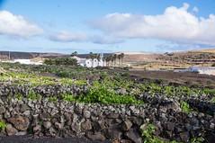 Lanzarote (Canaries/Espagne) (PierreG_09) Tags: lanzarote canaries espagne ile volcan lacorona volcanique désertique ye vigne muret murette