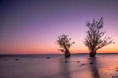 Two trees again! (Lealtadpics) Tags: antrim coantrim canon6d canon24105 loughneagh water sunset nireland longexposure trees ulster blue hour