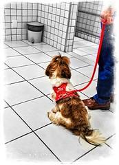 LRM_EXPORT_20170512_141954-01_1494610494188 (cnajhar) Tags: dog cachorro cute selectivecolor animal photoborder fofo