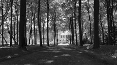 Stand Tall (❀ Rosemarie Christina ❀ [Slowly catching up]) Tags: artinbw blackwhitephotos bw blackandwhite woods monochrome trees nature silhouette flickrelite flickriver ruby3