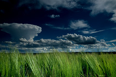 wild Burgenland (adschi berger) Tags: countryside landscape view field burgenland austria photography commercial clouds sky sun sunset nikon reflection vienna healthy lifestyle moment capture fun hobby student travel wanderlust weathee storm blizzard rain popcorn