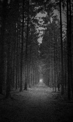 Looking for light on endless paths (Rosenthal Photography) Tags: agfavista200 color oste c41 offensen städte olympustrip35 20170501 bw wald 35mm analog flus dörfer siedlungen trees forest darkness light landscape nature olympus trip agfa vista epson v800 path