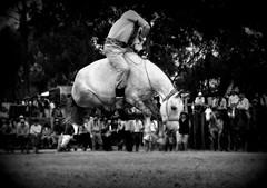 Augusto Oliveira (Eduardo Amorim) Tags: gaúcho gaúchos gaucho gauchos cavalos caballos horses chevaux cavalli pferde caballo horse cheval cavallo pferd crioulo criollo crioulos criollos cavalocrioulo cavaloscrioulos caballocriollo caballoscriollos pampa campanha fronteira pelotas riograndedosul brésil brasil sudamérica südamerika suramérica américadosul southamerica amériquedusud americameridionale américadelsur americadelsud cavalo 馬 حصان 马 лошадь ঘোড়া 말 סוס ม้า häst hest hevonen άλογο brazil eduardoamorim gineteada jineteada