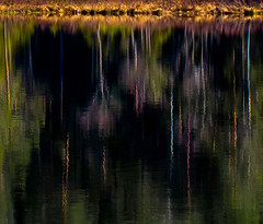 Reflections (bjorbrei) Tags: water surface pond tarn lake reflections trees forest shore lillomarka marka oslo norway