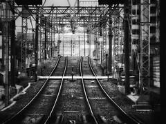 Along+the+Tracks