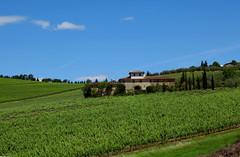 The heartbeat Tuscany (LaDani74) Tags: meadow countryside nature landscape naturescape tuscany dicomano italy vines vineyards chiantirufina hills spring sunny farmhouse